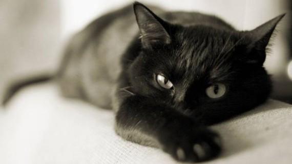 До самоубийства могут доводить кошки